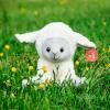 Lamb Heartbeat Kit - Lamb 2 100x100