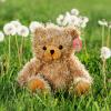 Tan Bear recordable stuffed animal kit - Tan Bear 2 100x100